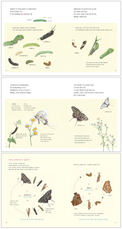 애벌레가 들려주는 나비 이야기(철수와 영희 그림책 1)(양장본 HardCover) 도서 상세이미지