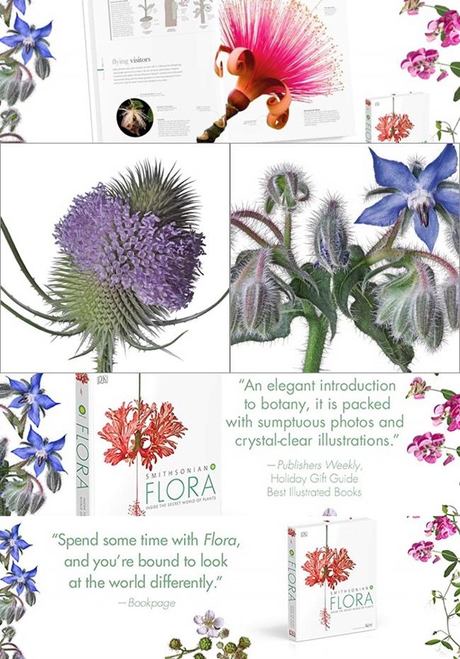 Smithsonian: Flora 도서 상세이미지