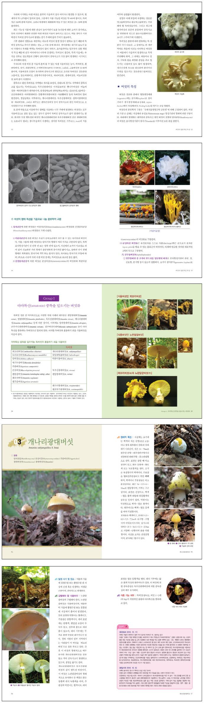 독버섯도감(반양장) 도서 상세이미지