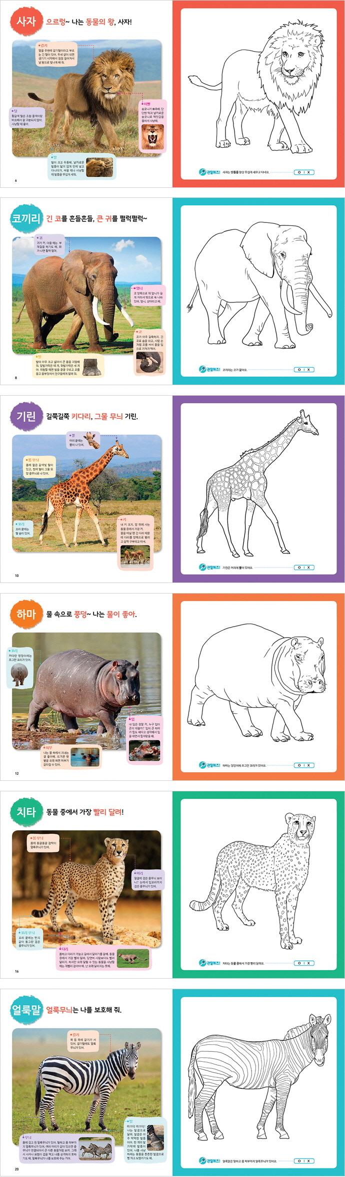 똑똑한 자연관찰 색칠공부. 1: 아프리카 동물(색칠한 그림이 세밀화가 되는) 도서 상세이미지