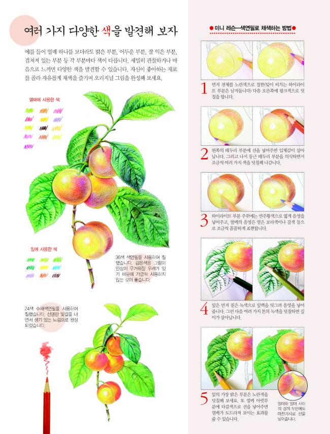 뇌운동 채색화(꽃과 과일 3) 도서 상세이미지