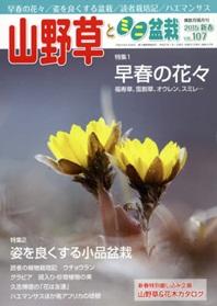 山野草とミニ盆栽 산야초와 미니분재 1년 정기구독 -6회  (발매일: 12일)