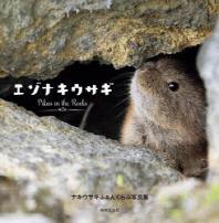 エゾナキウサギ PIKAS IN THE ROCKS ナキウサギふぁんくらぶ寫眞集