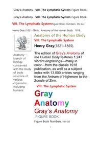 그레이아나토미 해부학의 제8권 림프계 의 도해 그림책.Gray's Anatomy . VIII. The Lymphatic System Figure Book.by Henry Gray
