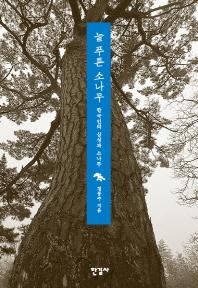 늘 푸른 소나무