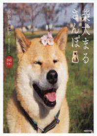 柴犬まるさんぽ