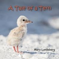 A Tale of a Tern