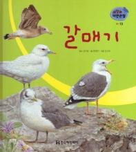 새. 13: 갈매기