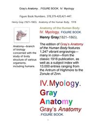 그레이 아나토미의, 제4권 근육학 근학 筋學 해부학.도해 圖解 그림책. Gray's Anatomy. IV. Myology FIGU