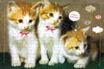 고양이 판퍼즐