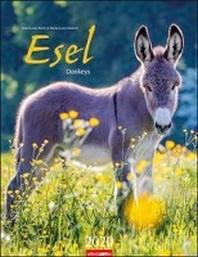 Esel - Kalender 2020