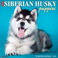 Just Siberian Husky Puppies 2021 Wall Calendar (Dog Breed Calendar)