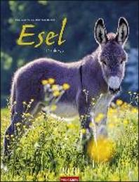 Esel - Kalender 2021