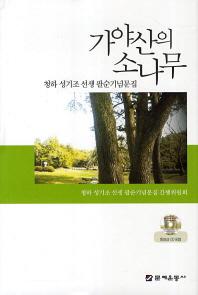 가야산의 소나무