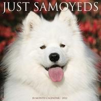 Just Samoyeds 2022 Wall Calendar (Dog Breed)