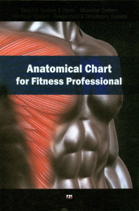 Anatomical Chart for Fitness Professional