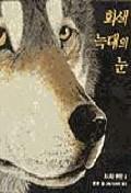 회색 늑대의 눈
