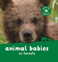 Animal Babies in Forests