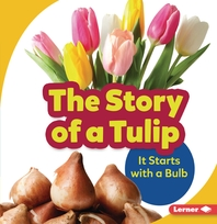 The Story of a Tulip