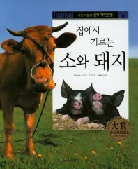 집에서 기르는 소와 돼지