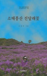소태봉산 진달래꽃