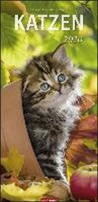 Katzen - Kalender 2020