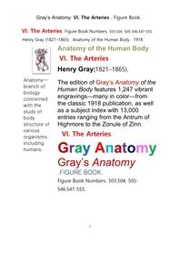 그레이아나토미 해부학의 제6권 동맥 의 도해 그림책.Gray's Anatomy. VI. The Arteries . Figure Book.by Henry Gray.