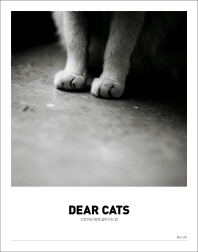 디어캣츠(Dear Cats) vol. 1