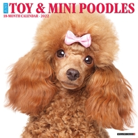 Just Toy & Miniature Poodles 2022 Wall Calendar (Dog Breed)