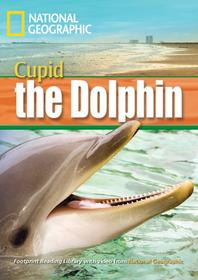 Cupid the Dolphin