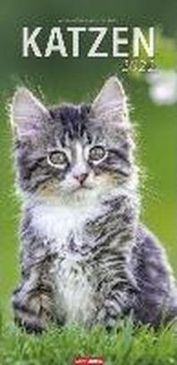 Katzen Kalender 2022
