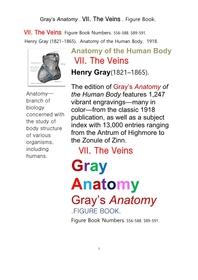 그레이아나토미 해부학의 제7권 정맥 의 도해 그림책.Gray's Anatomy . VII. The Veins . Figure Book.by Henry Gray