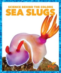 Sea Slugs