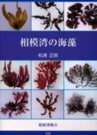 相模灣の海藻
