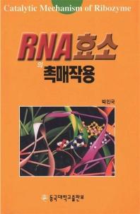 RNA 효소의 촉매작용