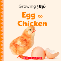 Egg to Chicken (Growing Up) (Library Edition)