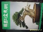 한국수석연구소 / 한국의 분재화훼 / 한국분재협동조합 편 -상세란참조