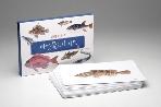바닷물고기 카드 - 보리 어린이