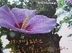 [나라꽃무궁화화보백과 ]생명나무 오천년 무궁화꽃이피었습니다