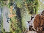 청주 두꺼비 생태공원