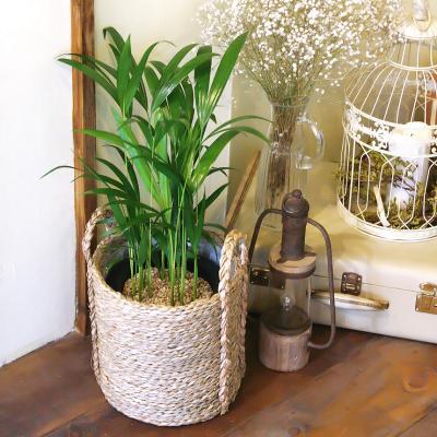 아레카 야지 중형 라탄바구니 세트 공기정화식물