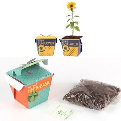 홈가드닝 해바라기씨앗 화분 흙 세트