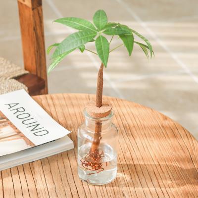 메이크정글 GLASSY NO.4 공기정화식물 수경화분