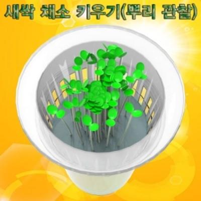 뿌리 관찰 새싹 채소 키우기 (1인용)