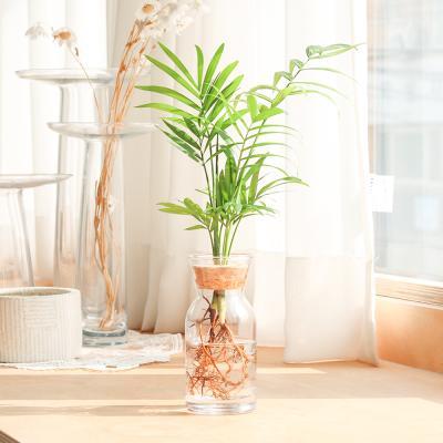 메이크정글 GLASSY NO.6 공기정화식물 유리 수경화분