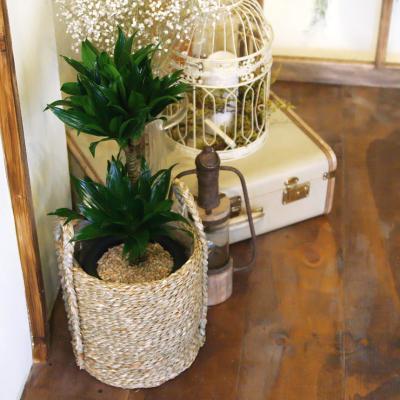 콤팩타 중형 라탄바구니 세트 공기정화식물