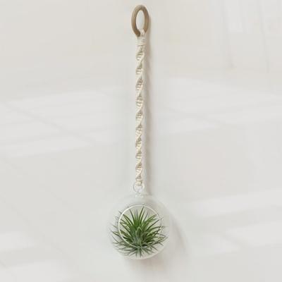 [공기정화식물]유리볼 틸란드시아 (택배배송)