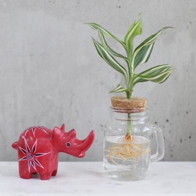 메이크정글 GLASSY MUG 공기정화식물 유리 머그컵