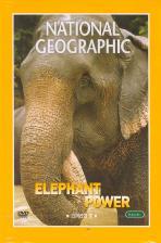 코끼리의 힘 [ELEPHANT POWER]